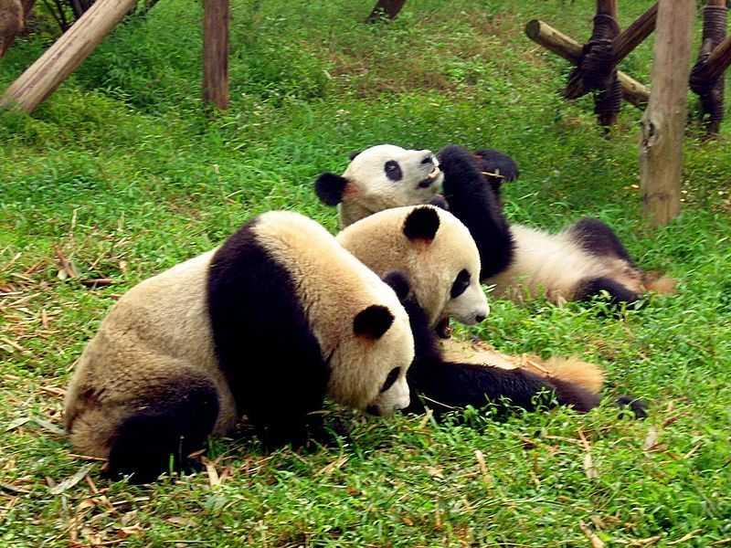 Viajar a http://www.tripperzone.com/images/places/chengdu.jpg
